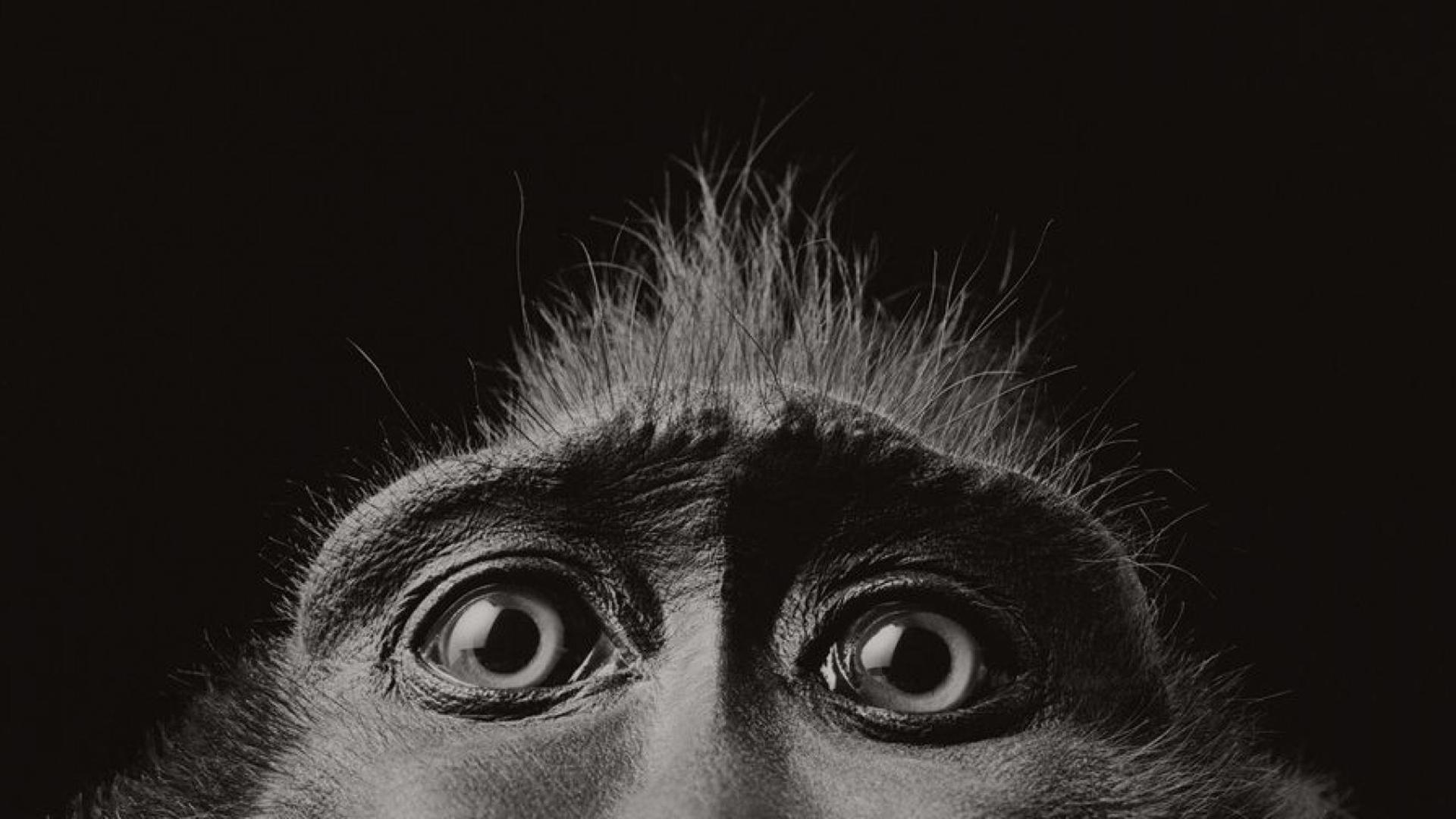 Смешные картинки животных черно белые, надписью столица
